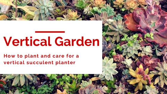 How To Make A Vertical Succulent Garden Lisa Ventura Art